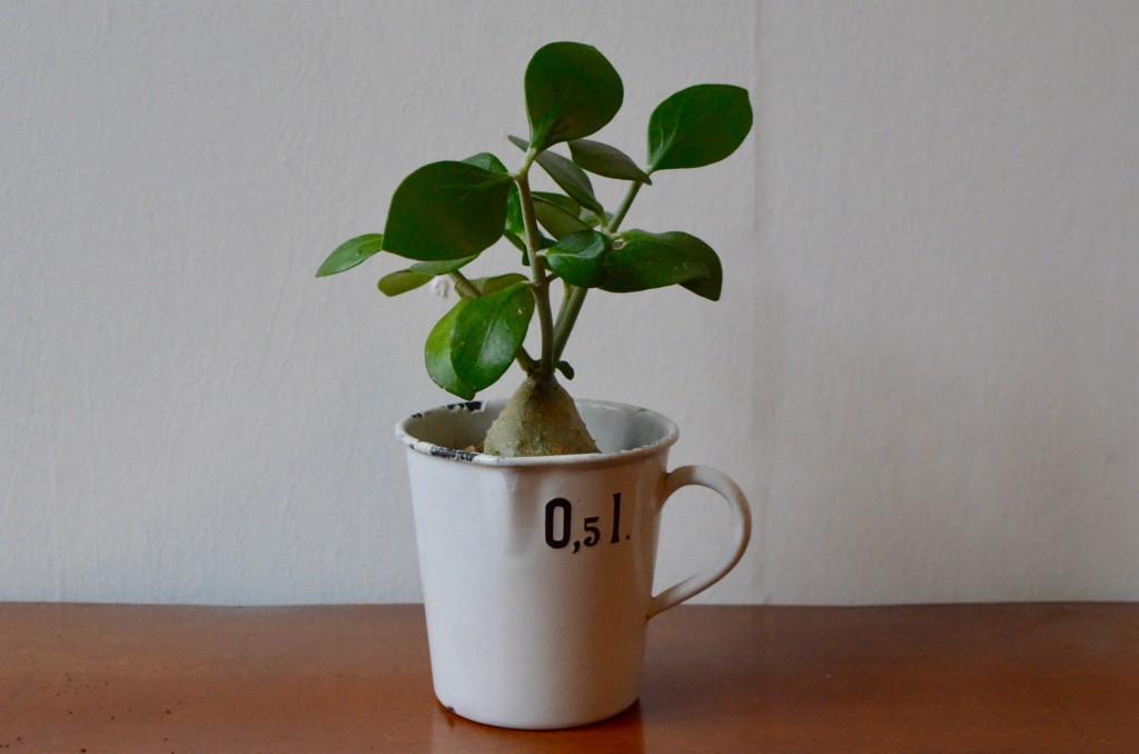 "Pot émaillé blanc ""Glud & Marstrand"""