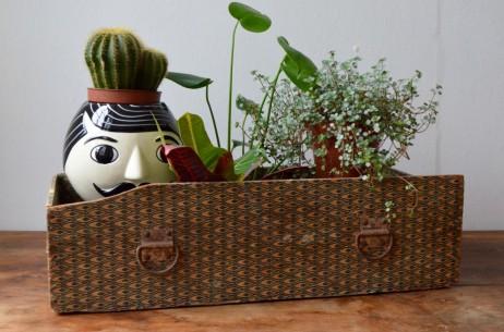 Caisse tiroir boîte ancienne années 30 art déco vintage rétro jardin d'intérieur déco bohème antic wooden box drawers plants stand
