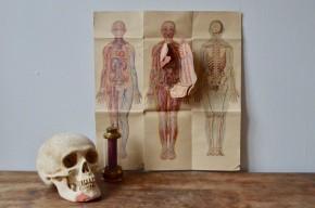 Ces planches d'anatomie anciennes proviennent certainement d'un ancien livre de médecine. Les dessins au traits presque naïfs et aux couleurs pastelles possèdent un charme particulier presque suranné qui fleure bon le cabinet de curiosité. Une des illustrations s'effeuille pour laisser apparaître les différents organes façon écorché.