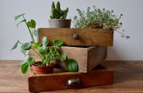 Nous aimons beaucoup les tiroirs anciens, la poésie qui s'en dégage, les trésors qu'on y trouve parfois et leur allure bohème. Seuls ou en série, ils ne demandent qu'à reprendre du service. Place à l'imagination, les utilisations sont multiples... Notre dernier coup de coeur, les empiler et créer un petit jardin intérieur en y disposant notre collection de plantes vertes!