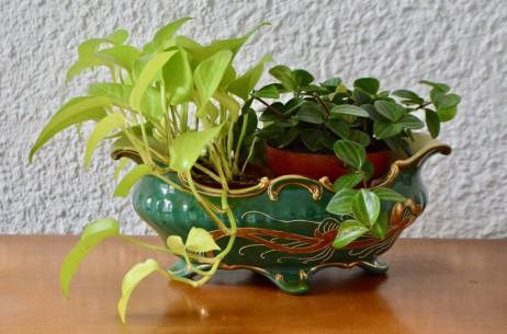 Les années 1900 voient l'avènement d'un style décoratif révolutionnaire : l'art nouveau. Les artistes prennent leur inspiration dans les formes naturelles en particulier dans le monde végétal. tiges vrilles, et boutons floraux sont stylisés, étirés dans leurs essences en interminables volutes, foisonnants et colorés. Il n'y a donc pas d'écrin plus adapté pour les lierres, misères ou autre plantes aux jolies formes que cette belle jardinière art nouveau. En faïence de Sarreguemines, elle mêle les formes organiques aux contrastes des émaux en reliefs. Le doré rehausse un vert profond, et met en lumière de jolies renoncules stylisées.