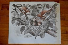 Affiche double face ancienne MDI école : Le nid d'oiseaux - ballade en dromadaire