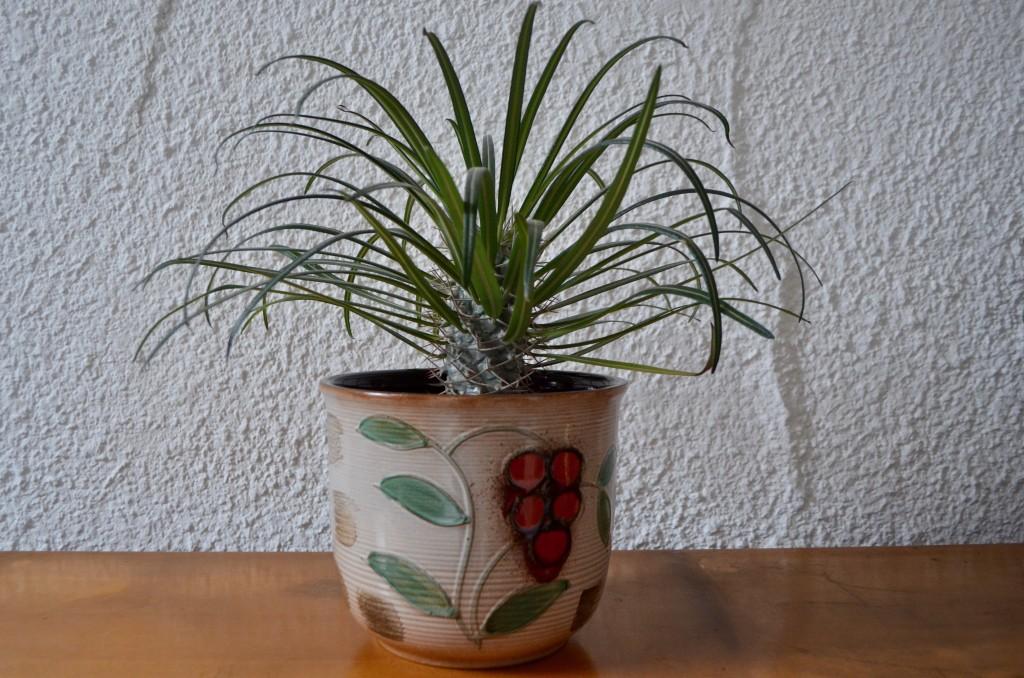 Cache-pot Scheurich