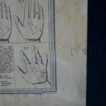 Lithographie Phrénologie, Maison Basset